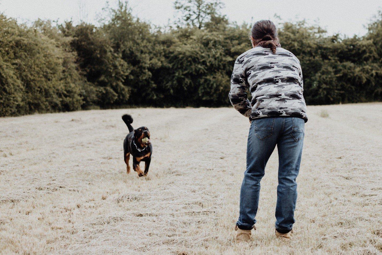 Training basic commands to dog
