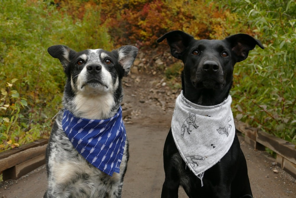 Two pet dogs with behavioral issues