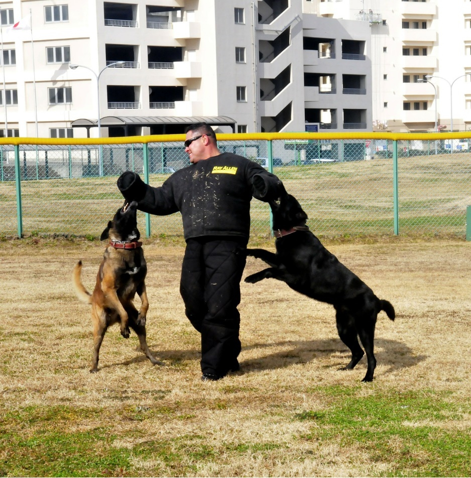 How to hire a dog trainer?Things to look for when hiring a dog trainer