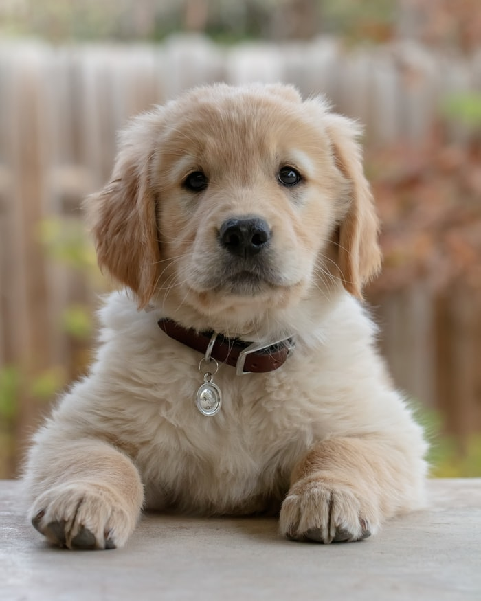 Best books for new dog owners