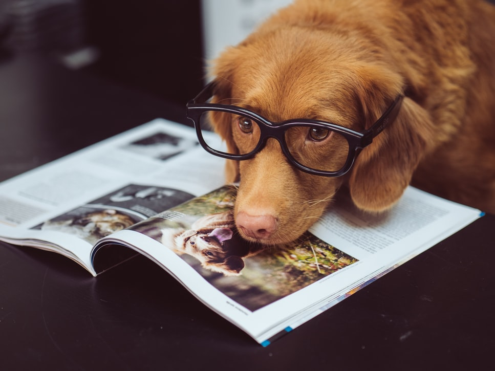 Why do dogs need mental stimulation?