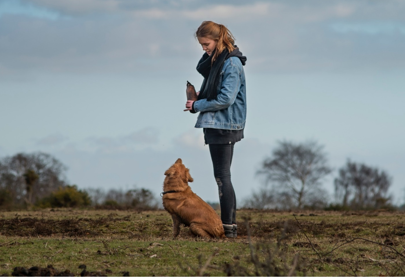 Positive rewards to use in dog training