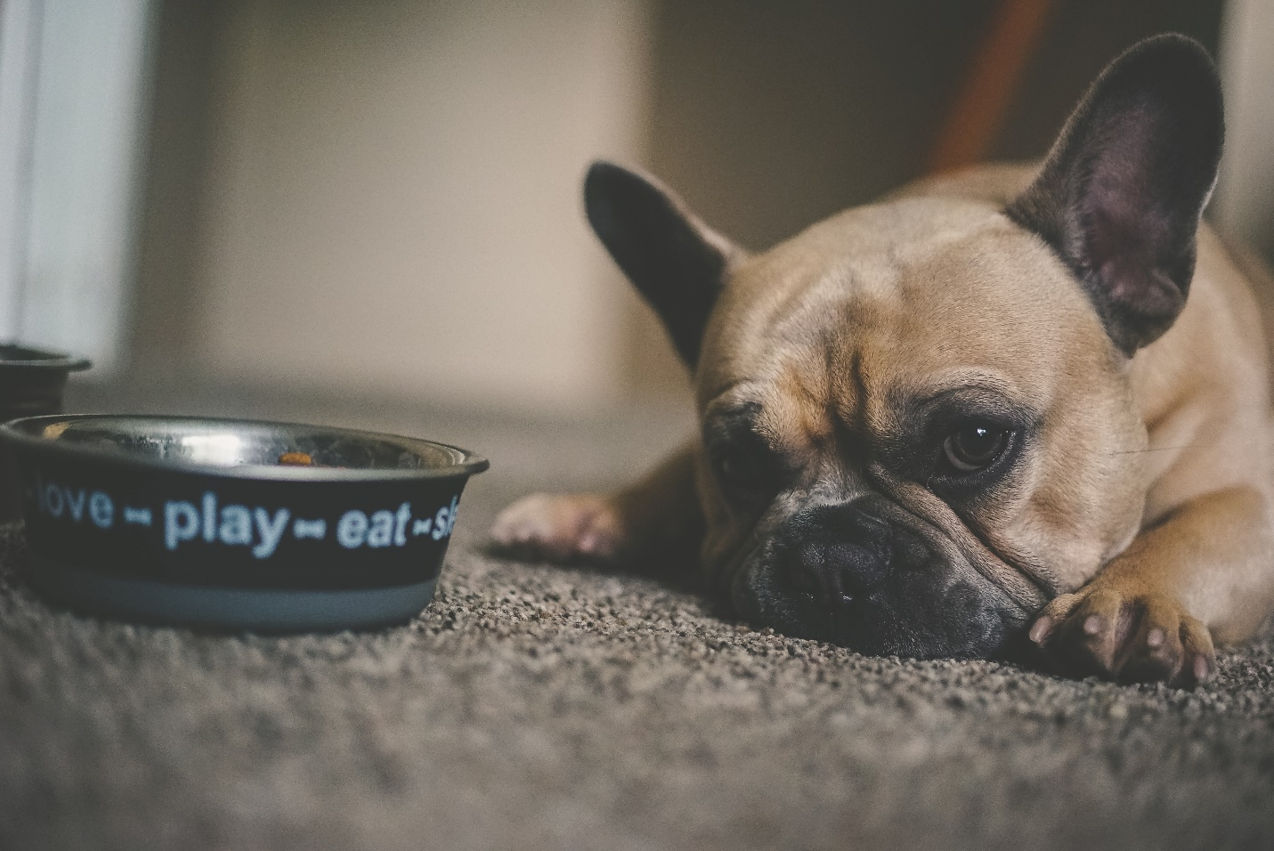 Why your dog is a picky eater?